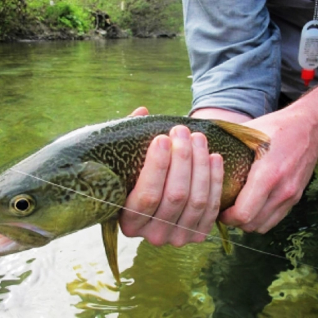 рыбалка на радужной форели челябинск