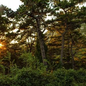 Forest Orien_2