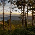 Forest Orien